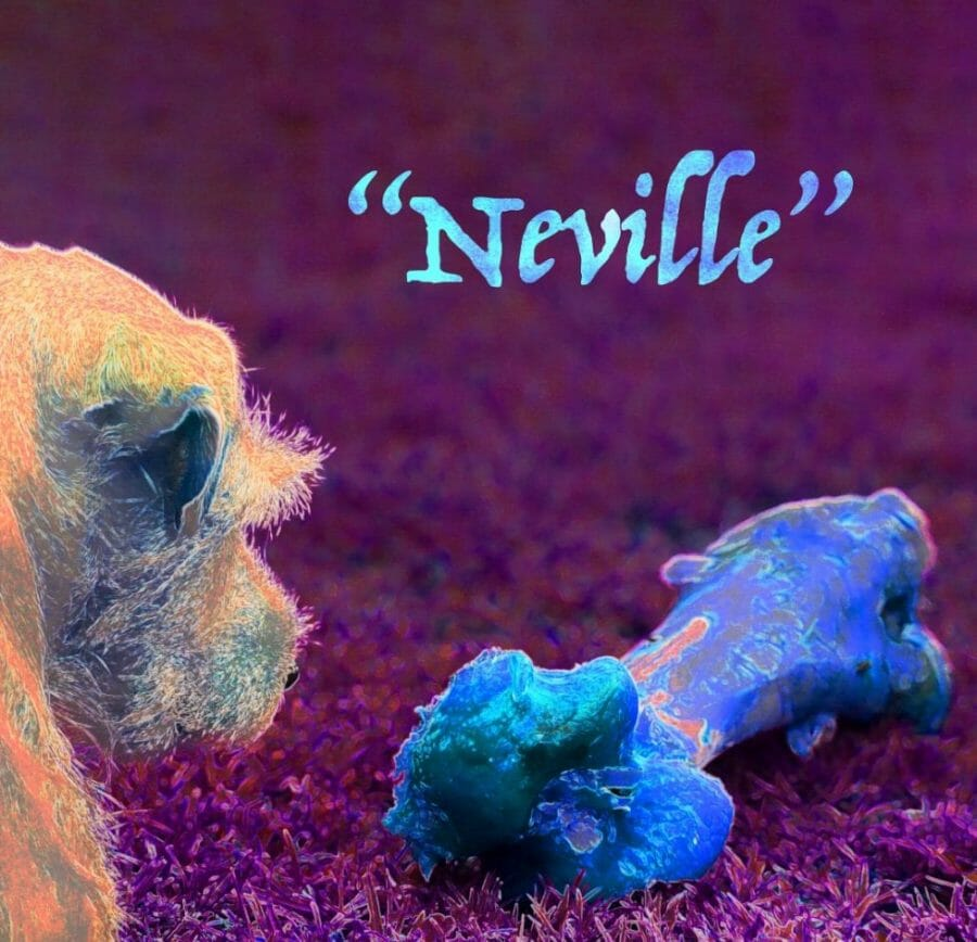 Neville album cover